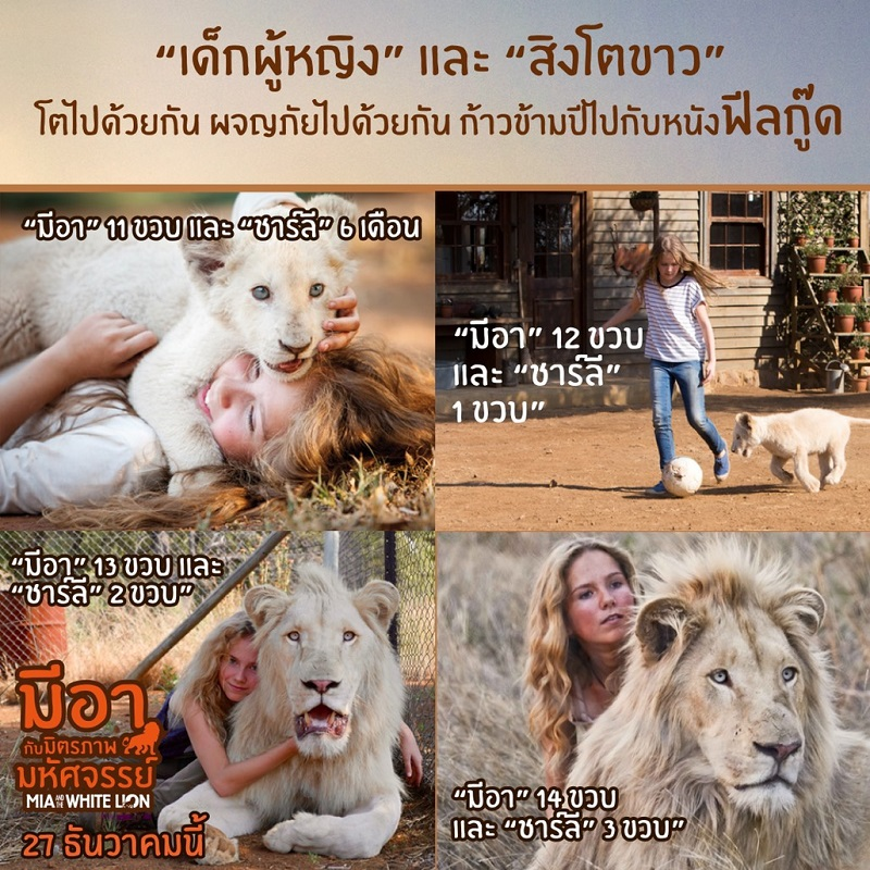 Mia-White-Lion-Relationship-Info01